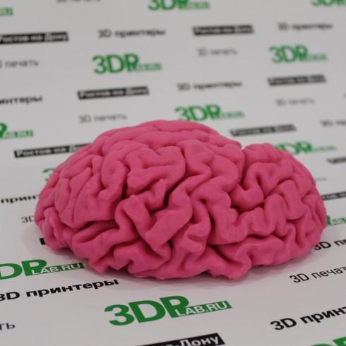 Левое полушарие мозга